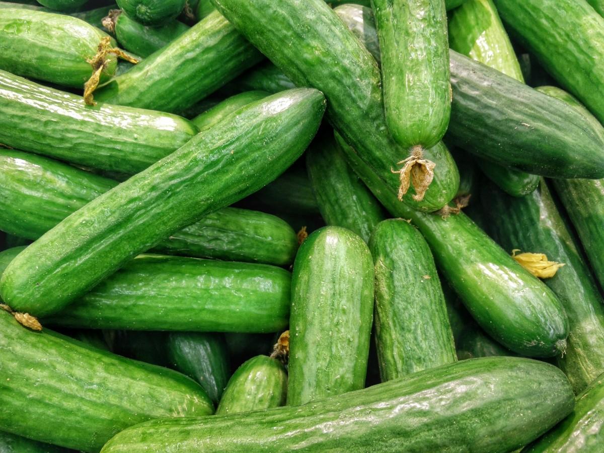 Cucumber (Vietnam 2015)